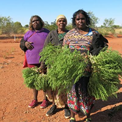 Three indigenous women holding branches. Artists of Ampilawatja.